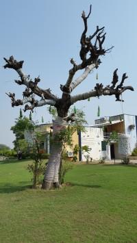 thefarmjaipur