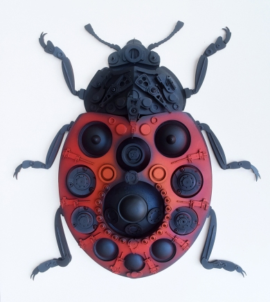 008_coccinellidae_ladybug