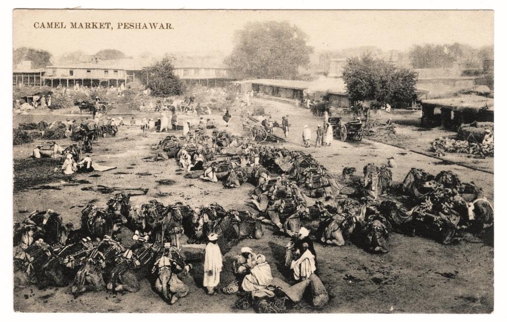 Peshawar - Camel Market